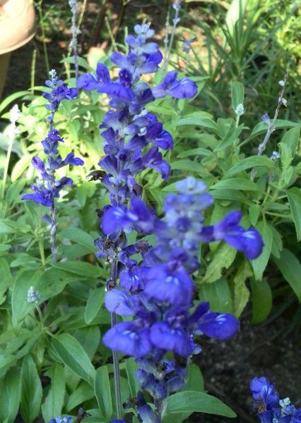 今日の庭 2