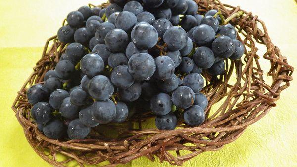 ブドウの収穫[i:139]
