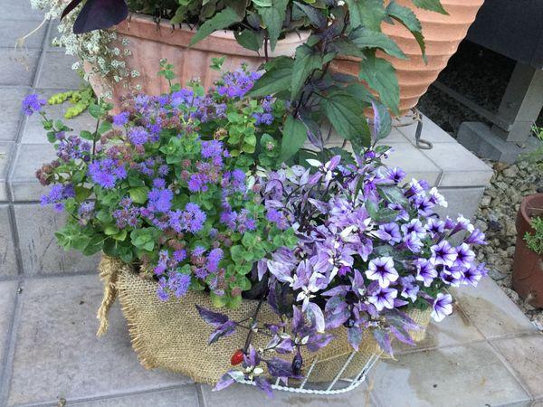 今日は青い花
