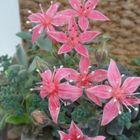 菊日和のお花が可愛らしいです~💕