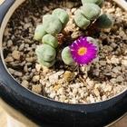 雛鳩〜ありがとう、はじめまして赤紫の花🤗