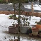 秋に植えたソヨゴ(160㎝ぐらい) これか...
