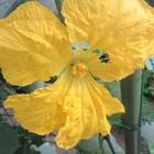 6月24日  土砂降りの雨の朝、咲いて...