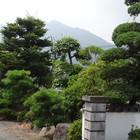 故郷の正門出入り口に、隣接した槇や松...
