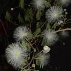 植木鉢でも毎年綺麗に咲いてくれます。 ...