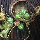 秋の収穫 沖縄雀ウリ 別名は「琉球オモ...