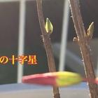 新芽見つけました🌱 3本の挿し木っ子達は...
