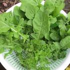 #家庭菜園 今日の収穫1.1  今日は、 ル...