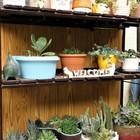 1⃣📷個性豊かな鉢と植物を並べたスチール...
