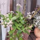2⃣📷小さな花の集まりが、白い雪化粧の様...