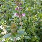 フォックスリータイム  小さなお花が咲...