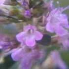 フォックスリータイムの お花です🎵