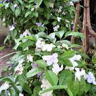 3⃣📷庭先中央から小さな木のニオイバンマ...