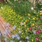 春の花壇 小さな花がたくさん咲く花壇。...