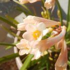 2021.1.25.キルタンサスのやさしい花色。