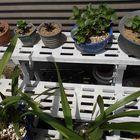 挿し芽の<多肉植物>大きくなりました...