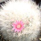 高砂?の花