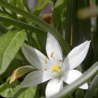 4月1日。 二日前に開花し始めていたオ...