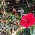 花壇に多肉植物寄せ植え