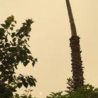 日本はもう9/11−キナコ色の空を1日旅し...