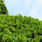 今日の庭の景色「7」