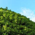 今日の庭の景色「2」