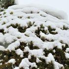 今日の庭の雪景色「5」