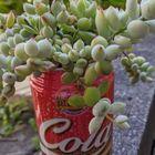 コーラ缶のコチドレン