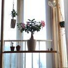 今年は2月〜7月まで咲き続いて 中休み。...