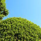 今日の庭の新緑の木々「3」