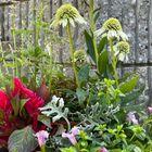 夏の寄せ植え  左後ろは涼しげなアガス...