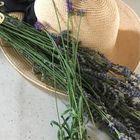 今年も梅雨の合間に収穫出来ました。  ...
