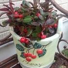 鉢と同じ植物を見つけました チェッカー...