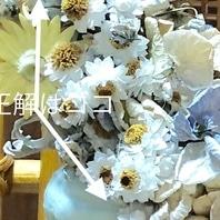 ヘリクリサム(ムギワラギク・帝王貝細工) 写真
