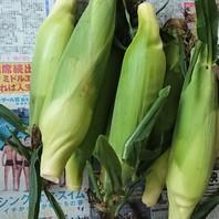トウモロコシ(スイートコーン) 写真