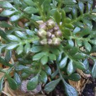 その他の植物 写真