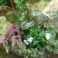 ・夏に向けて葉ものを使って涼しげな寄...