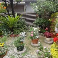春の花満開の私のお庭です。