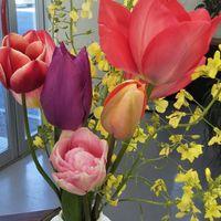 今日もお庭の花を職場に持って行きまし...