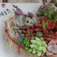 プチ講習で可愛い💛の鉢に、多肉さん寄せ...
