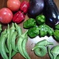 今朝収穫した野菜  夏野菜もそろそろ終...