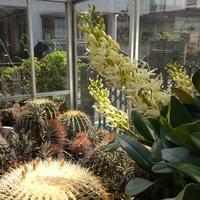 今の我が家の温室(無加温)風景です。...
