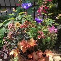 昨年の秋に作った寄せ植えを春にリメイ...