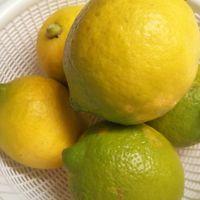 昨年12月13日に収穫したレモン 過去最高...