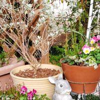 ローズアーチの横の寄せ植え達。