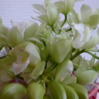 切り花にしたシンピジュウム。 長いこと...
