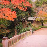 橋のたもとの紅葉も風情が有ります~