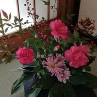 庭の山茶花、菊、南天、アオキの葉を飾...
