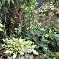 1⃣📷庭先側面の花壇の周りでのヘデラ・ヘ...