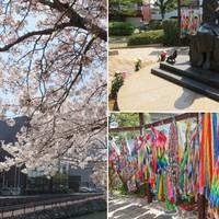 🌸平和市民公園で見た桜並木とワンパク広...